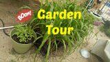 A short walkabout the garden : Urban Garden : Desert Garden