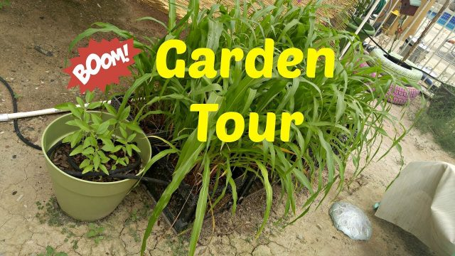 A short walkabout the garden : Urban Garden : Desert Garden