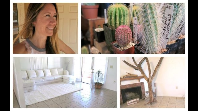 Desert Plants & Home Decor Planning Begins