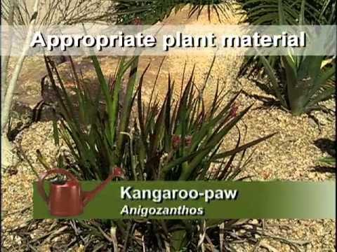 Southwest Xeriscapes – Arizona – Carol Stuttard