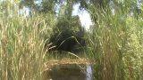 az  desert  botanical  gardens  trip   with  god  children   5-31/11