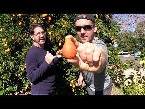 WINTER GARDEN TOUR of The Urban Farm – Phoenix, Arizona