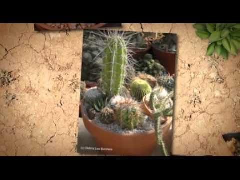 Succulents! Cactus