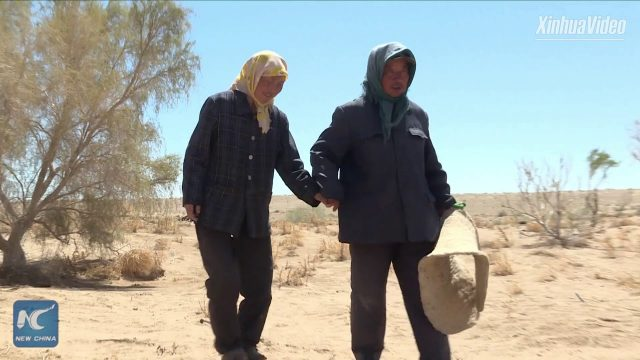 Desert turns into oasis: Man plants 50,000 trees in 15 years in N China