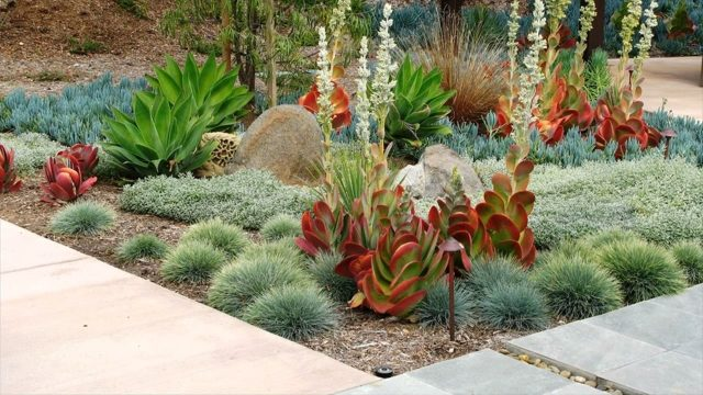 What Is Going Green Landscaping – How To Do Desert Landscaping