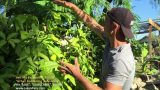 120 Degree GARDEN TOUR in Arizona – WOW!