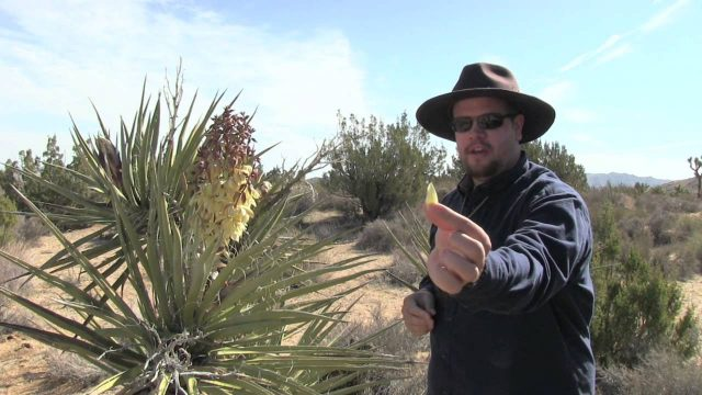 Wild Edible Plants Mojave Yucca, Wilderness Survival