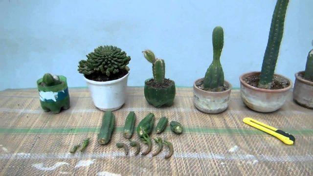 Siembra y Arreglo de cactus