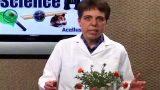 Desert plant adaptations – AG2