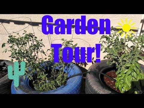 Az Urban Garden Tour – seedling update!