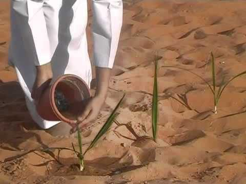 Let's Plant the Desert [2005]