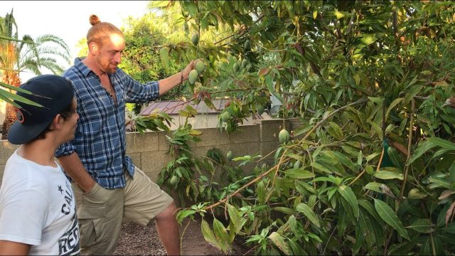 DECADES OLD Food Forest In Phoenix | Tour A Master Gardener's Yard