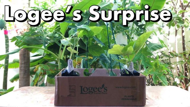 One Arizona Garden | Logee's Tropical Plants Surprise
