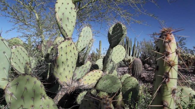 Phoenix travel video from Armchairtourist.com