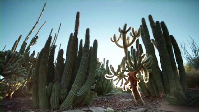 History of Desert Botanical Garden