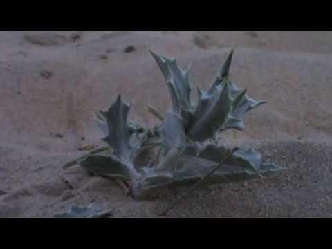 Thorny Desert Plant