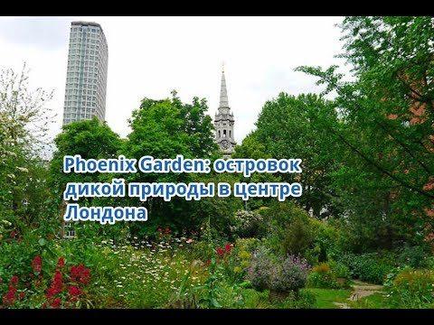 Островок дикой природы в центре Лондона: садик Phoenix Garden вместо парковки