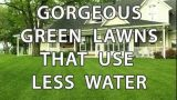 Green Lawns Using Less Water