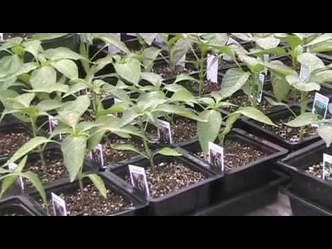 Rillito Nursery Spring 2009
