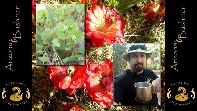 In Search of Wild Munchies (Edible and Useful Plants)