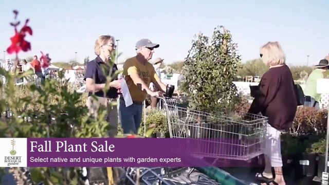 Fall Plant Sale at Desert Botanical Garden