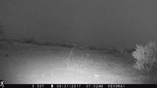 Kevs Texas Trail Cam Chihuahuan Desert Bobcat