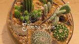 Make a Cactus Terrarium – How To Terrarium ep. 4