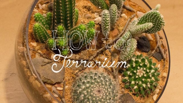 Make a Cactus Terrarium – How To Terrarium ep. 4