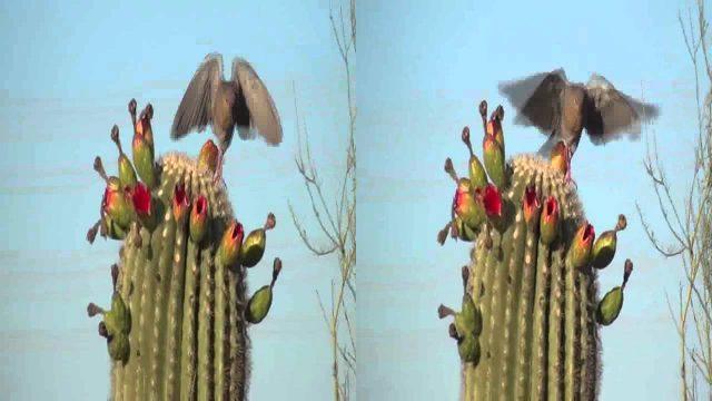 Botanical Garden, Phoenix, AZ