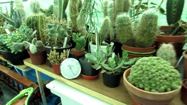 Living with Desert Plants in Ireland and high humidity – Our Challenge