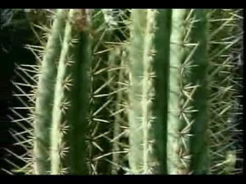 Plants Survive in the Desert