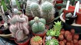 Our Polytunnel Cacti and Succulent Plant collection