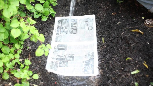 How to Use Newspaper in Landscaping : Beautiful Garden Landscaping