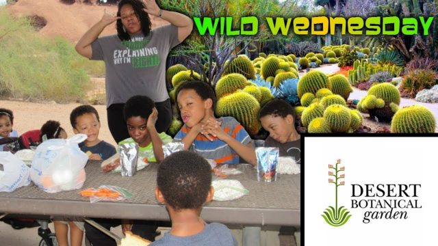WILD WEDNESDAY | Hole In The Rock | Desert Botanical Garden