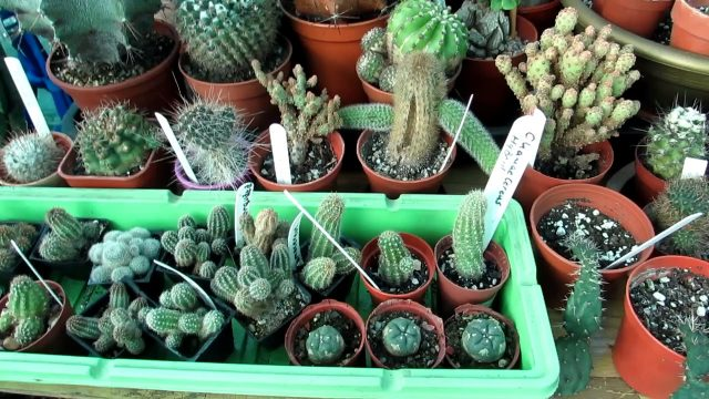 Our Cacti & Succulent Plants & Houseplants end of November Update
