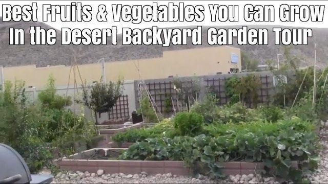 Best Fruits & Vegetables You Can Grow in the Desert Backyard Garden Tour