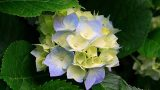 Spring Flower – Phoenix Garden