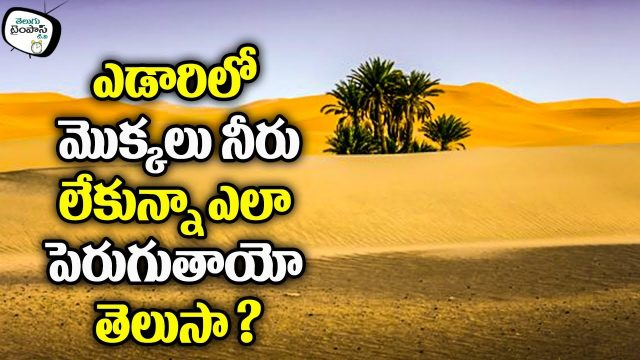 How Do Desert Plants Survive Without Water || Telugu Timepass Tv