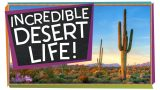 Amazing Ways to Live in the Desert!