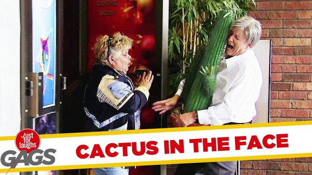 BOOM! CACTUS IN THE FACE