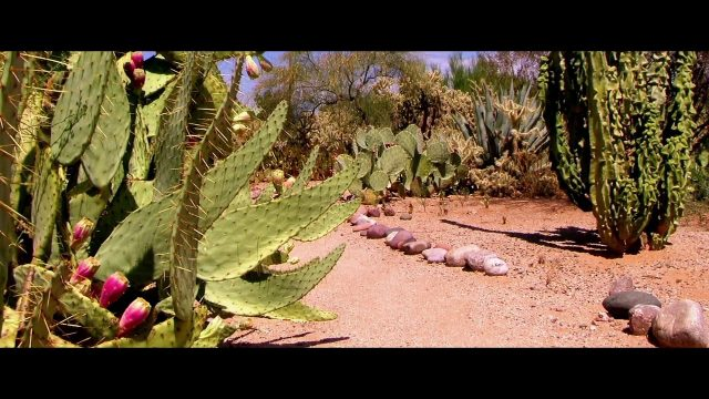 Mikes Grillin..Meditation Video 3,,Arizona Landscapes
