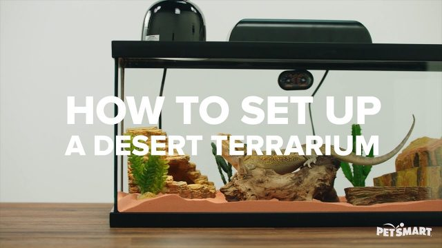How to Set Up A Desert Terrarium