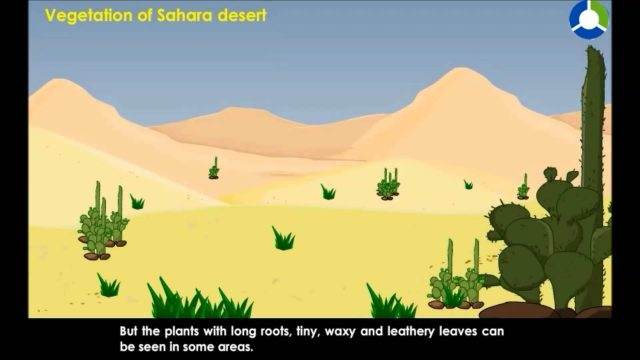 Vegetation of Sahara Desert