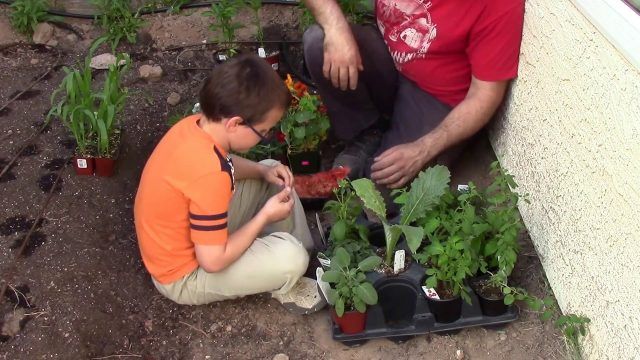 Desert Backyard Permaculture Design Part 6: Planting the Garden
