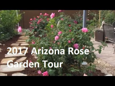 Phoenix AZ Area Rose Garden Tour