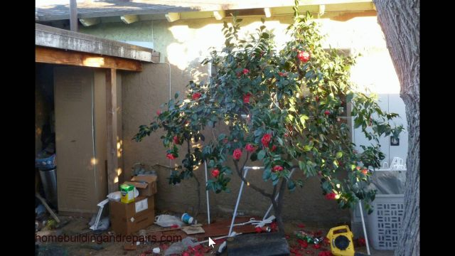 Keep Plants And Cactus Away From Fire Egress Windows – Home Safety Tips
