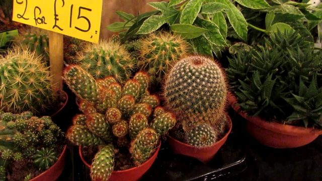 Our INCREDIBLE NEW Cactus Plants from Belfast Christmas Market