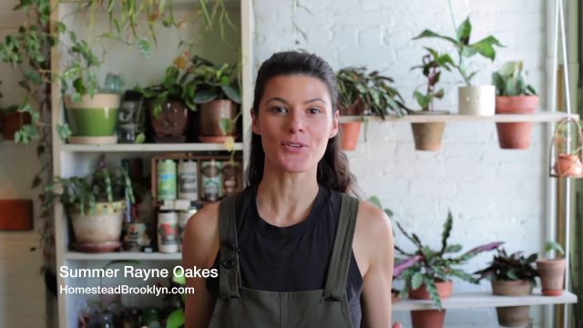 Ep 033: Plant One On Me: Cacti Anatomy — Field Trip!