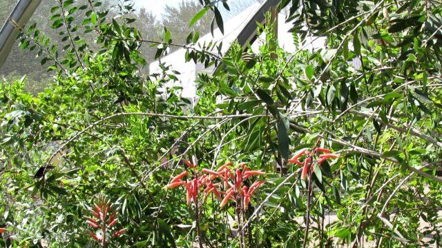 2012 Desert Botanical Gardens