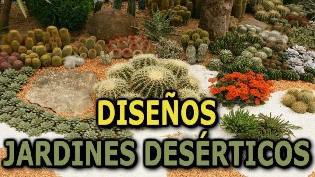 Diseños de jardines desérticos (Plantas desérticas) || Info Garden